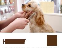 grooming-serv